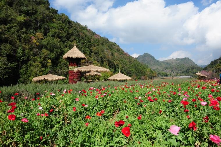 Doi Angkang_Chiang Mai 2