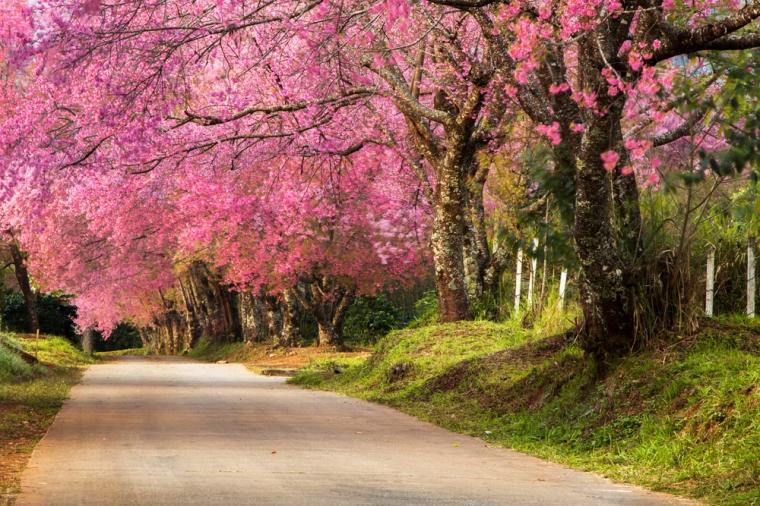 Khun Wang_Chiang Mai 1
